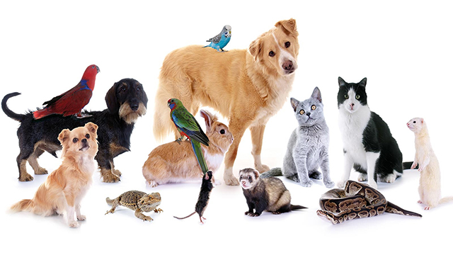 Lihat yuk Cara Merawat Hewan Peliharaan dengan Baik!